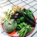 あんちゃんの野菜_1